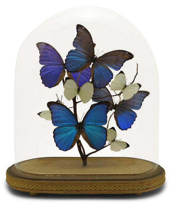 vlindersinstolp