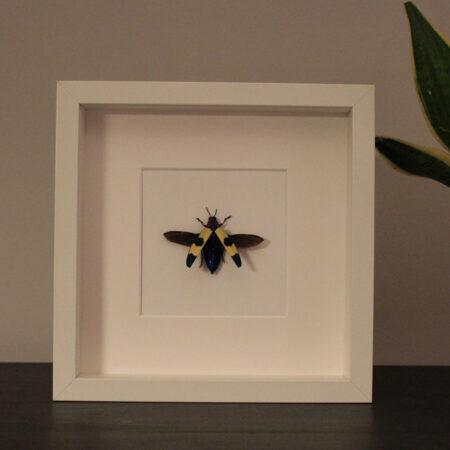 Fonkelnieuw Opgezette, ingekaderde insecten   Insecten Design WG-42