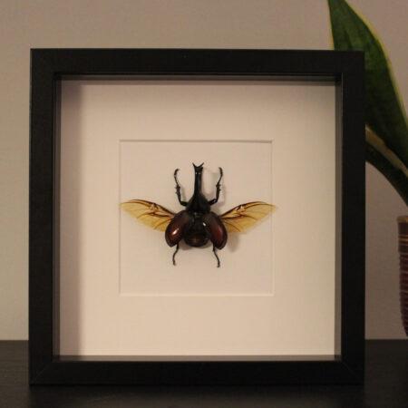 Hedendaags Insecten Design   Ingekaderde insecten, vlinders en schorpioenen HJ-08